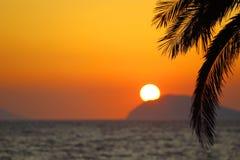 夏天日落、异乎寻常的场面与棕榈剪影和太阳在天际 免版税库存照片
