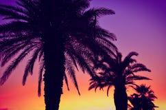 夏天日落五颜六色的棕榈树 免版税库存图片