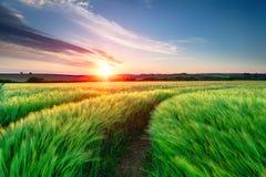 夏天日落在康沃尔郡 免版税库存照片