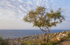 夏天早晨在马略卡海岛 库存图片