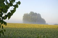 夏天早晨庄稼领域和薄雾 免版税库存图片