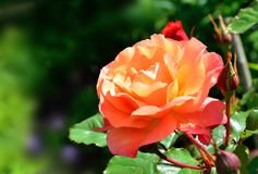 夏天明亮的花 晴朗的日 免版税库存照片