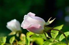 夏天明亮的花 晴朗的日 库存照片