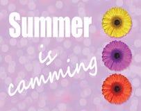 夏天是凸轮系统与三根大丁草在浅紫色的背景的花开花 库存图片