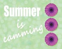 夏天是在浅绿色的背景的凸轮系统和紫色大丁草花开花 库存照片