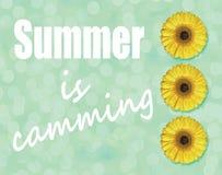 夏天是在浅绿色的背景的凸轮系统和黄色大丁草花开花 库存图片