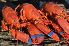 夏天晚饭的美妙地煮熟的红色龙虾 库存图片