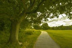 夏天有一棵美丽的树的公园路 免版税库存图片