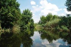 夏天有芦苇和树密林的洪泛区河  免版税图库摄影