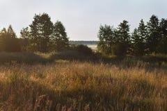 夏天有薄雾的早晨 免版税库存照片