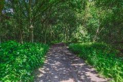 夏天有起斑纹的阳光的森林道路 免版税库存图片