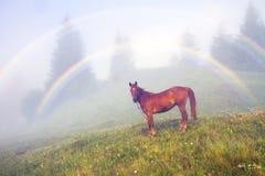 夏天有雾的彩虹 免版税库存图片