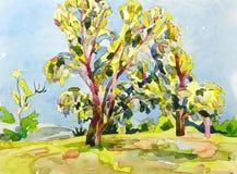 夏天树原始的水彩绘画  库存图片