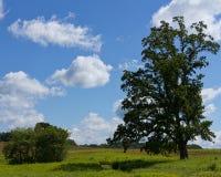 夏天树和天空 库存图片