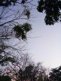 夏天树天空 免版税库存图片