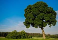 夏天树 库存图片