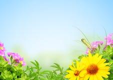 夏天框架 免版税库存图片