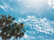 夏天棕榈 免版税库存图片