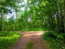 夏天森林交叉路照片 库存照片