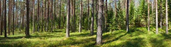 夏天森林全景 库存照片