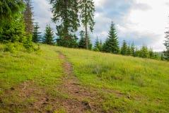 夏天森林小径 沼地在森林里 免版税库存图片