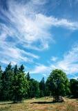 夏天森林幽暗 免版税库存照片