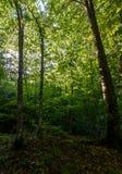 夏天森林早晨 免版税库存照片