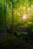 夏天森林早晨 库存照片
