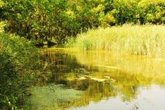 夏天森林河在一个晴天 免版税库存图片