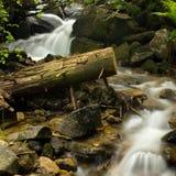 夏天森林美好的自然风景的快速的河在夏时 免版税库存照片