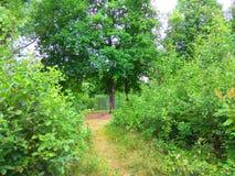 夏天森林道路照片 免版税库存图片