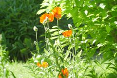 夏天植物群 库存图片
