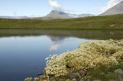 夏天横向在冰岛。 库存图片