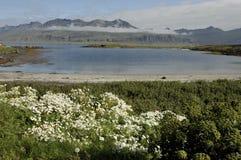 夏天横向在冰岛。 免版税库存照片