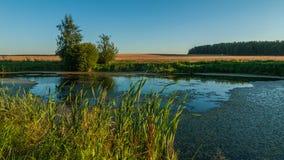 夏天横向 从海岸的看法通过芦苇向在一个农业领域中间的一个小沼泽的湖 库存照片