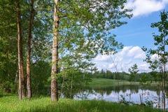 夏天横向 从绿色海岸向湖和相反岸的看法通过沿海树 免版税库存图片