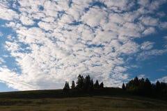 夏天横向 冷杉木剪影在山坡和magni的 免版税库存图片