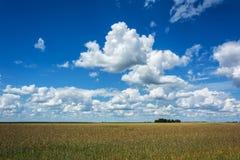 夏天横向 在领域的积云与粮食作物 免版税库存照片
