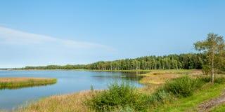 夏天横向 有沿海芦苇的一个湖和岸的一个杉木森林 库存照片