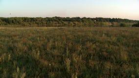 夏天横向 池塘顶视图  影视素材
