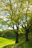 夏天横向 绿色夏天公园树和日落轻发光通过分支 库存照片