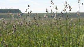 夏天横向 绿草开花摇摆反对一个被犁的领域和小山的背景 影视素材