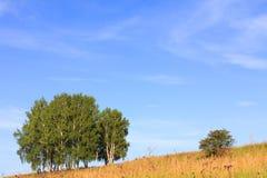 夏天横向 图库摄影