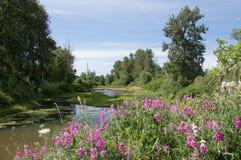 夏天池塘在有桃红色野花的尤金俄勒冈 库存照片