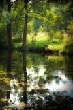 夏天池塘在森林里 免版税库存照片