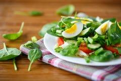 夏天沙拉用鸡蛋 免版税库存图片