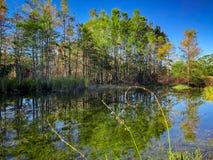 夏天沼泽植物 库存图片