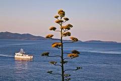 夏天海柔光和绿色树 免版税库存照片