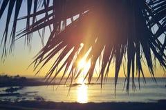夏天海滩日落棕榈树葡萄酒背景 免版税库存图片