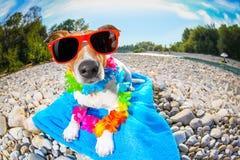 夏天海滩狗 免版税库存照片